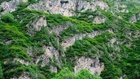 De groene installaties met sterke vitaliteit op de steenberg stock foto