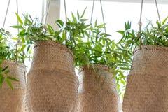 De groene installaties in rieten manden die voor groot venster hangen, winkelen voorzijde stock afbeeldingen