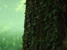 De groene kleuren van de bergen Stock Foto's