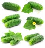 De groene komkommer plantaardige vruchten met doorbladeren stock foto's