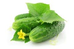 De groene komkommer plantaardige vruchten met doorbladeren Stock Afbeelding