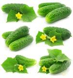 De groene komkommer plantaardige vruchten met doorbladeren stock afbeeldingen
