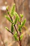 De groene lente Stock Foto's