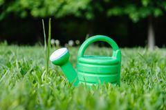 De groene lente die kan met gras bedekken tuinieren Nevel stock foto's