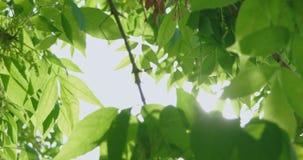 De groene luifel van boombladeren met gat in het centrum stock videobeelden