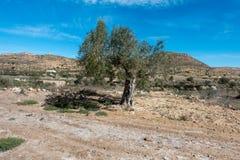 De groene manier van Lucainena onder de blauwe hemel in Almeria Stock Fotografie