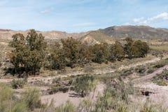 De groene manier van Lucainena onder de blauwe hemel in Almeria Royalty-vrije Stock Afbeelding