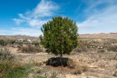 De groene manier van Lucainena onder de blauwe hemel in Almeria Stock Afbeeldingen