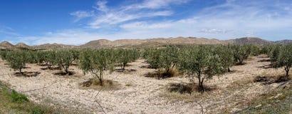 De groene manier van Lucainena onder de blauwe hemel in Almeria Stock Foto's