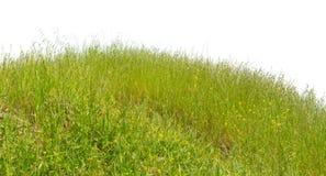 De groene natuurlijke zomer van het heuvelgras geïsoleerd op wit Stock Foto's