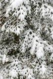 De groene nette boom in de wintertijd De takken van de spar die met sneeuw worden behandeld stock foto's