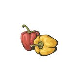 De groene paprika's, kennen ook als paprika of paprika Stock Afbeelding