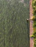 De groene rivier in het midden van Berlijn Stock Foto's
