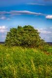 De groene slingering van wilgenbush in sterke wind royalty-vrije stock afbeelding