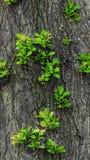 De groene spruiten groeien op een boom stock foto