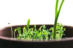 De groene spruiten van gras stock afbeelding