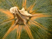 De groene Stam van de Pompoen Royalty-vrije Stock Afbeeldingen