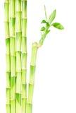 De groene Stammen van het Bamboe Royalty-vrije Stock Fotografie