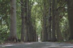 De groene steeg royalty-vrije stock fotografie