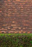De groene struiken van de baksteenomheining royalty-vrije stock afbeeldingen