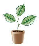 De groene tak groeit. Royalty-vrije Stock Afbeeldingen