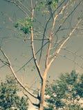 De groene takken van boombladeren stock afbeelding