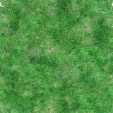 De groene Textuur van de Gras Naadloze Tegel Royalty-vrije Stock Afbeelding