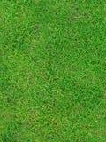 De groene textuur van het de zomergras Stock Afbeelding