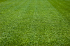 De groene Textuur van het Gras Royalty-vrije Stock Afbeeldingen