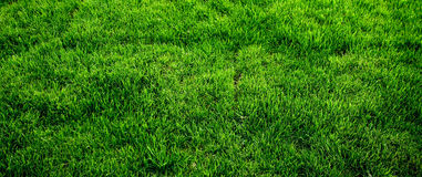 De groene Textuur van het Gras Stock Foto's