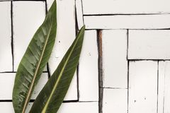 De groene tropische bladeren liggen op een witte achtergrond van plaqueraad Stock Afbeelding