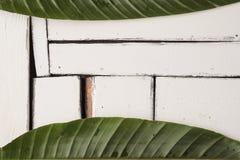 De groene tropische bladeren liggen op een witte achtergrond van plaqueraad Stock Afbeeldingen