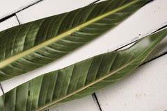 De groene tropische bladeren liggen op een witte achtergrond van plaqueraad Royalty-vrije Stock Foto's