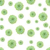De groene van het de Installatie Naadloze Patroon van Echeveria Succulente Witte Achtergrond royalty-vrije stock afbeelding