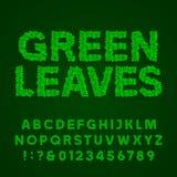 De groene vectordoopvont van het bladerenalfabet Stock Afbeeldingen