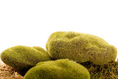 de groene vegetatie van de mosrots stock foto