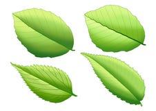 De groene verf van blad Verse bladeren op witte achtergrond vector illustratie