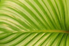 De groene verlofachtergrond Royalty-vrije Stock Afbeeldingen