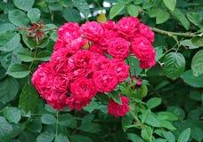 De groene verse bladeren met een mooi boeket van rode rozen in het midden zijn zeer kleurrijk en modieus royalty-vrije stock afbeelding