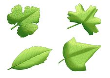 De groene Verse bladeren van de bladverf vector illustratie