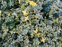 De groene voorraad van het bladpatroon Stock Foto's
