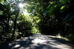 De groene weg royalty-vrije stock afbeeldingen