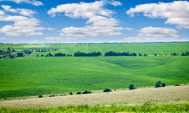 De groene weide van de zomer Royalty-vrije Stock Afbeeldingen