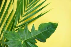 De groene wildernis van de bladeren tropische installatie met het blad van palmphilodendron op gele achtergrond stock afbeelding