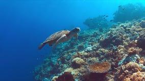 De groene Zeeschildpad zwemt op een Koraalrif Stock Afbeelding