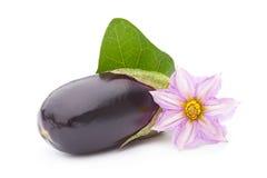De groenten van de aubergine met doorbladert en bloem Stock Foto