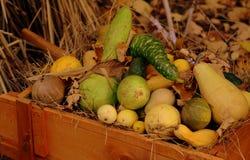 De groenten van de herfst Royalty-vrije Stock Afbeeldingen