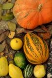De groenten van de herfst Stock Afbeelding
