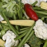 De groenten van de tuin Stock Afbeelding