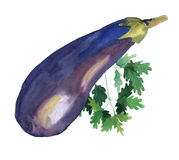 De groenten van de waterkleur Aubergine en peterselie Stock Illustratie